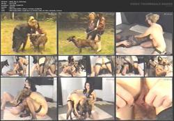 th_055925168_tduid5612_dutch_dog_in_action.mpg_123_101lo.jpg